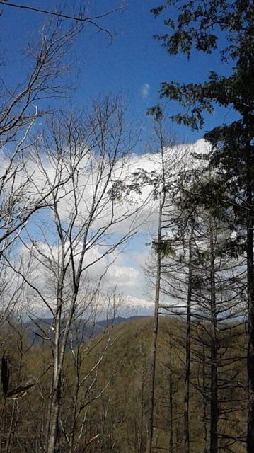 カラマツ林.jpg